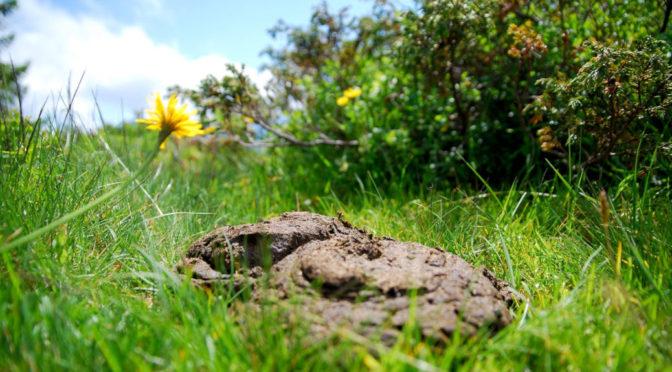 Grüne Wiesen, brauner Sumpf